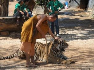 Tiger Temple
