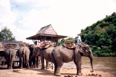 Campo Addestramento Elefanti a Tha Ton - Thailandia
