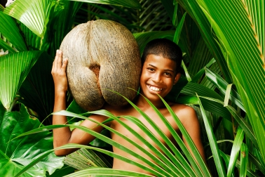 Seychelles_coco_de_mer
