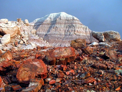 Petrified Forest - Arizona