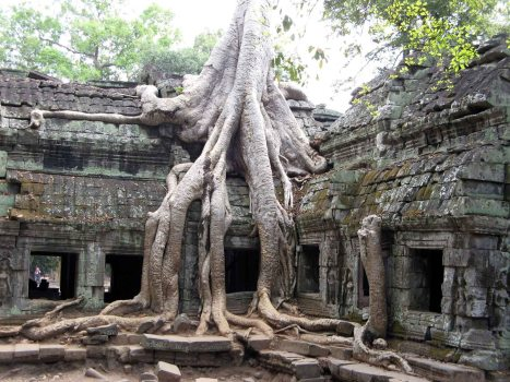Angkor Wat - TaPhrom Temple