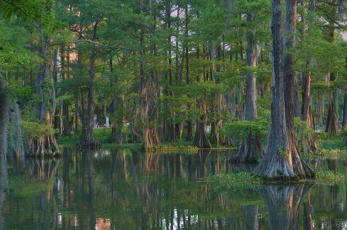 Lafayette Bayou - Louisiana