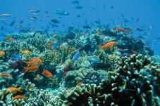 Fiji - Matamanoa Reef