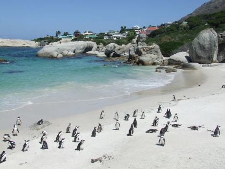 Boulders Beach - South Africa