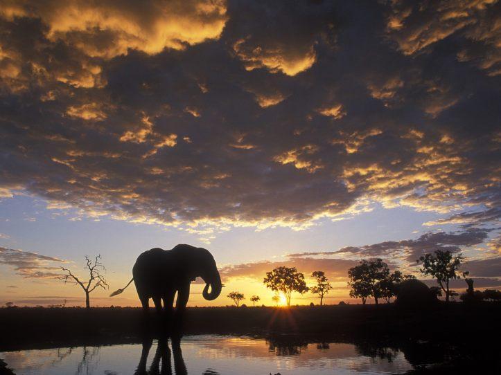 Chobe N. P. Botswana