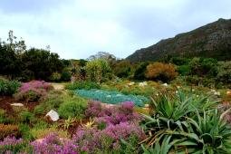 kirstenbosch-botanical-garden - South Africa