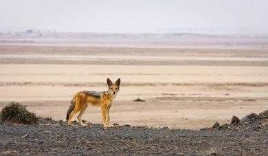 Damarland - Namibia
