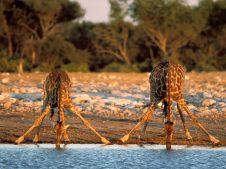 Etosha NP - Namibia
