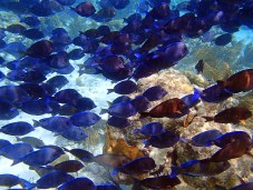 St. John - Reef