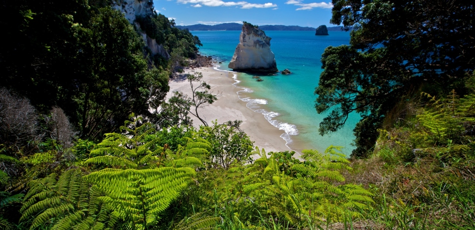 Cathedral Cove NZ