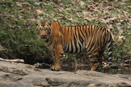 Parambikulam - Tiger Reserve