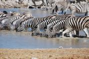 Africa - Zebre