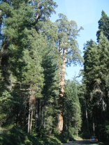 Sequoia & Kings National Park