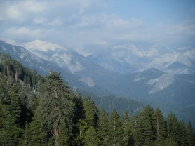 Sequoia & Kings National Park