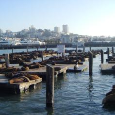 San Francisco - Fisherma's Wharf