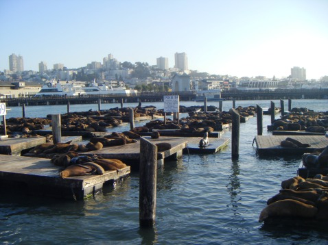 San Francisco - Fisherma's Wharf