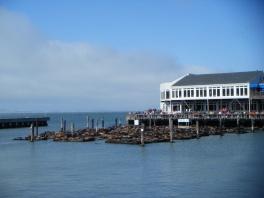 Pier 39 - San Francisco