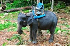 Elefant trekking