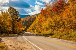 Route 40 - Foliage