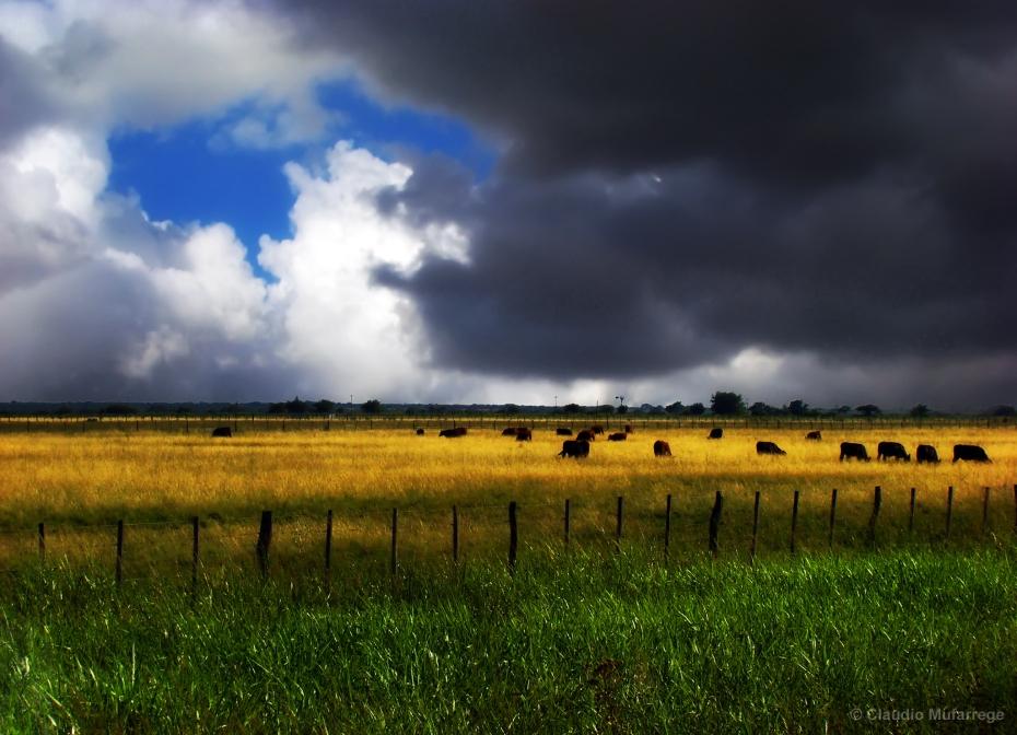 Pampa Argentina - Photo credit: Claudio.Ar