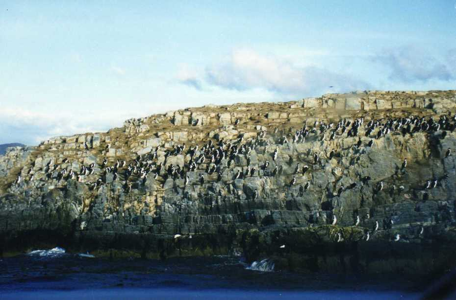 Punta Tombo - Argentina - -Photo credit: wallygrom