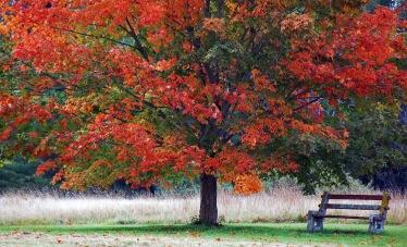 Maine - Foliage