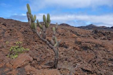 Sierra Negra - Galapagos Islands