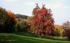 Baden-Wurttemberg - Foliage