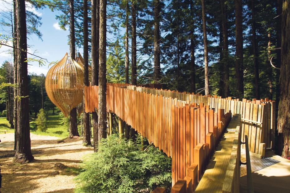 redwoods-treehouse-nuova-zelanda