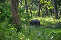 Parco Nazionale Chitwan - RIno