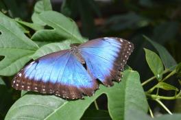Butterflies Observatory - Costa Rica