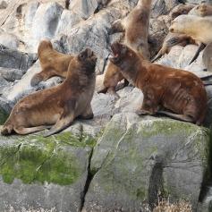 Leoni Marini - Peninsula Valdez